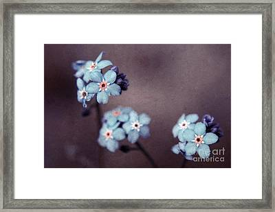 Forget Me Not 01 - S05dt01 Framed Print by Variance Collections