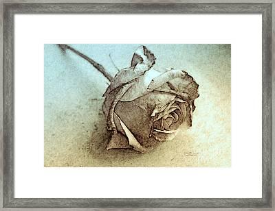 Forgotten Rose Framed Print by Jutta Maria Pusl