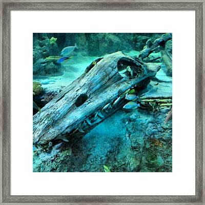 #fossil #hdr #hdr_lovers #creation Framed Print by Kel Hill