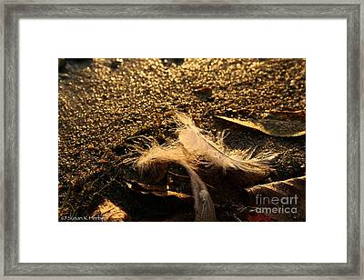 Found Feathers Framed Print by Susan Herber