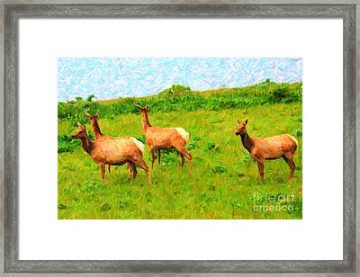 Four Elks Framed Print by Wingsdomain Art and Photography