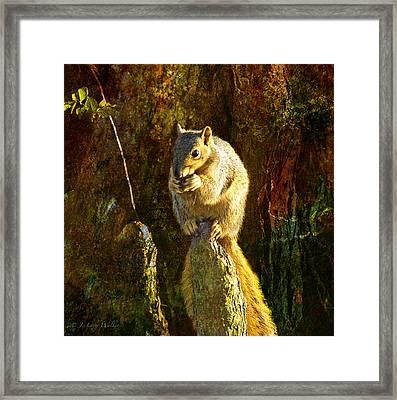 Fox Squirrel Sitting On Cypress Knee Framed Print by J Larry Walker