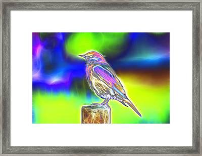 Fractal - Colorful - Western Bluebird Framed Print by James Ahn