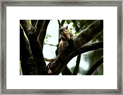 Fractal - Thumb Sucker - Robbie The Squirrel - 8574 Framed Print by James Ahn