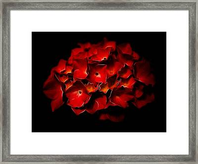 Fractalius Red Hydrangea Framed Print by Jay Lethbridge