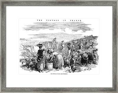 France: Grape Harvest, 1854 Framed Print by Granger
