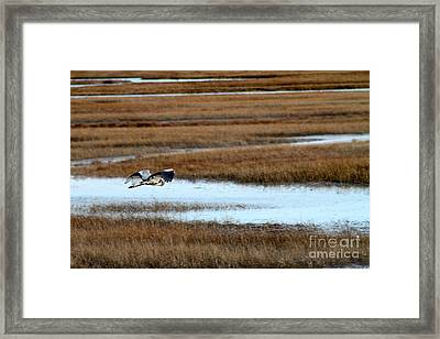 Freedom Framed Print by Eric Chapman