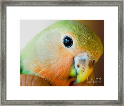 Freedom In The Eyes Framed Print by Syed Aqueel