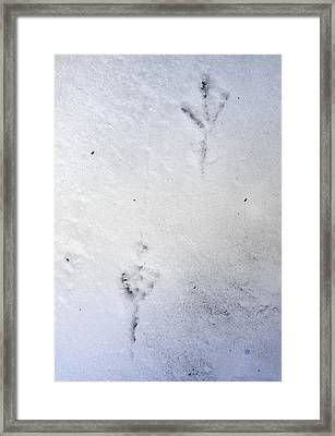 Freezing Framed Print by Greta Thorsdottir