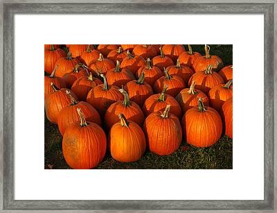 Fresh From The Farm Orange Pumpkins Framed Print by LeeAnn McLaneGoetz McLaneGoetzStudioLLCcom