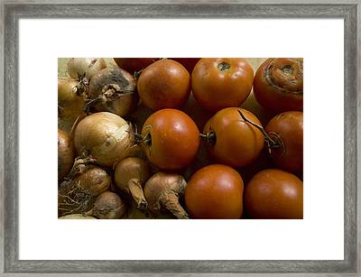 Fresh Tomatos And Onions From A Garden Framed Print by Joel Sartore