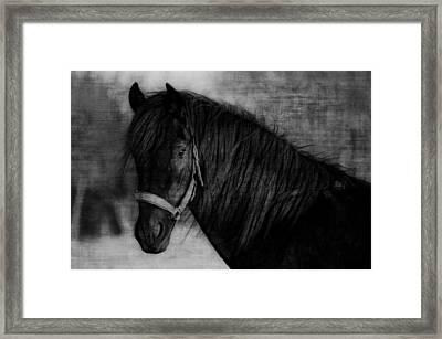 Fresian Framed Print by Marta Holka