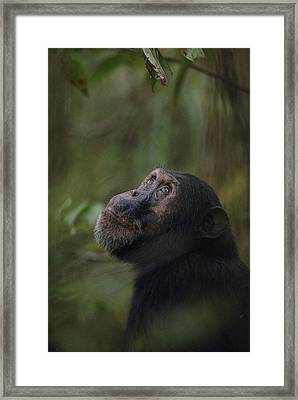 Freud, The Oldest Son Of Fifi Framed Print by Michael Nichols