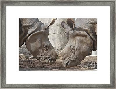 Friend Or Foe Framed Print by Jason Waugh