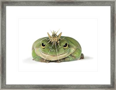 Frog And Grasshopper Framed Print by Darwin Wiggett