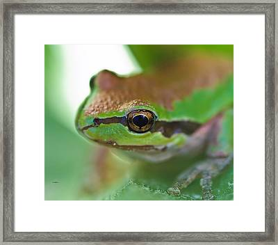 Frog Close Up 1 Framed Print by Mitch Shindelbower