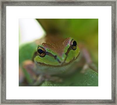 Frog Close Up 2 Framed Print by Mitch Shindelbower
