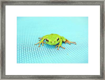 Frog Italy Framed Print by Rhys Griffiths Photography