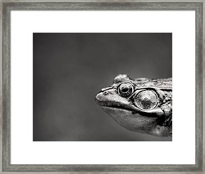 Frog Portrait Framed Print by Cappi Thompson