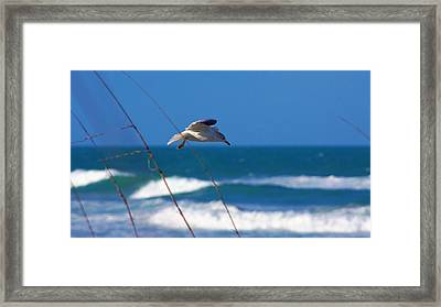 From The Dunes Framed Print by Don Youngclaus