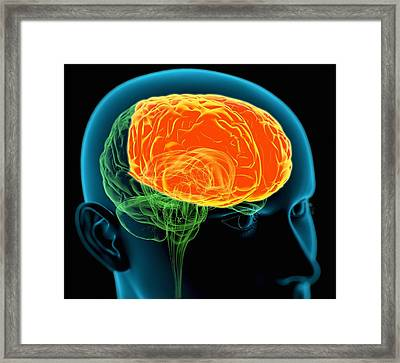 Frontal Lobes In The Brain, Artwork Framed Print by Roger Harris