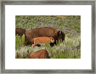 Frontier Family Framed Print by Bob Bahlmann