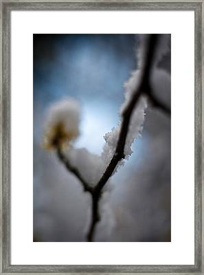 Frost Light Framed Print by Mike Reid