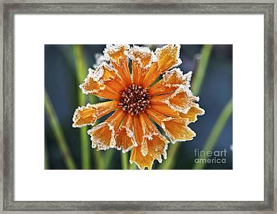Frosty Flower Framed Print by Elena Elisseeva