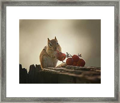 Fruit Of The Vine Framed Print by Susan Capuano