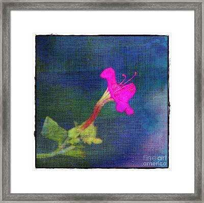 Fuchsia Flower Framed Print by Judi Bagwell