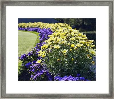 Full Bloom Framed Print by Peter Chilelli