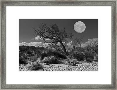 Full Moon Over Jekyll Framed Print by Debra and Dave Vanderlaan