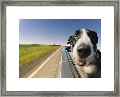 Fun Car Ride Framed Print by Darwin Wiggett