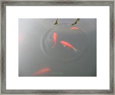 Fun Ripples Framed Print by Sonali Gangane