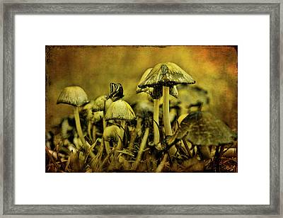 Fungus World Framed Print by Chris Lord