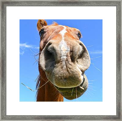 Funny Brown Horse Face Framed Print by Jennie Marie Schell