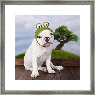 Funny French Bulldog Puppy Framed Print by Maika 777