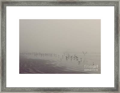 Galveston Island Foggy Morning Framed Print by Svetlana Novikova