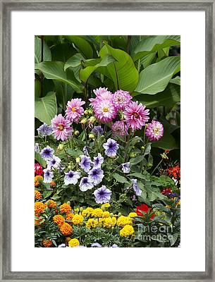 Garden Flowers In Bloom Framed Print by Michal Boubin
