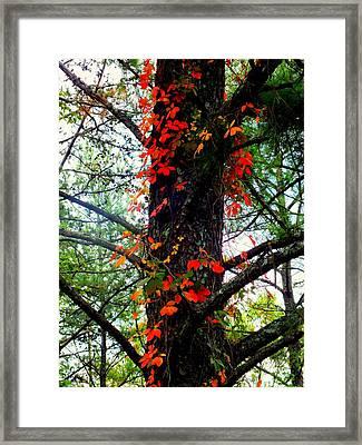 Garland Of Autumn Framed Print by Karen Wiles