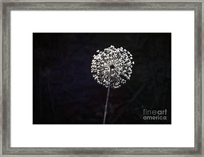 Garlic Flower Framed Print by Sacred  Muse