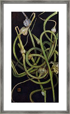 Garlic Heads Framed Print by Cynthia Adams