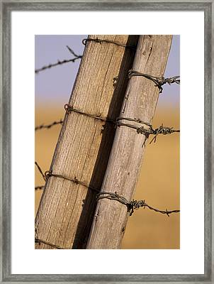 Gate Posts Join A Barbed Wire Fence Framed Print by Gordon Wiltsie