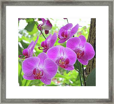 Gathering Of Orchids Framed Print by Becky Lodes