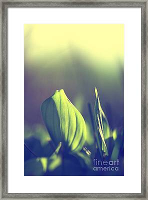 Green Leafes On Forest  Framed Print by Tanja Riedel