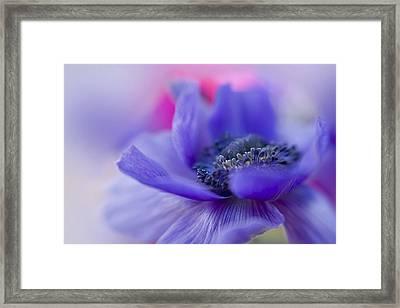 Gentle Breeze Framed Print by Jacky Parker