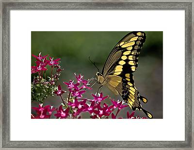 Gentle Giant Framed Print by DigiArt Diaries by Vicky B Fuller