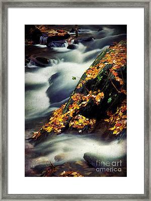 Gentle Grace Framed Print by Darren Fisher