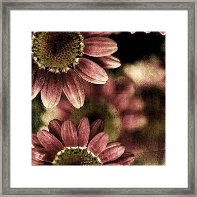 Gerberas Framed Print by Bonnie Bruno