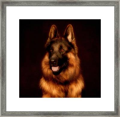 German Shepherd Portrait Framed Print by Sandy Keeton